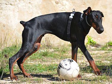 Ein besonderer Hund braucht Unterstützung!