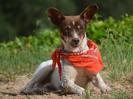 Lustiges Hundekerlchen wartet auf seine große Chance und freut sich derweil über finanzielle Unterstützung