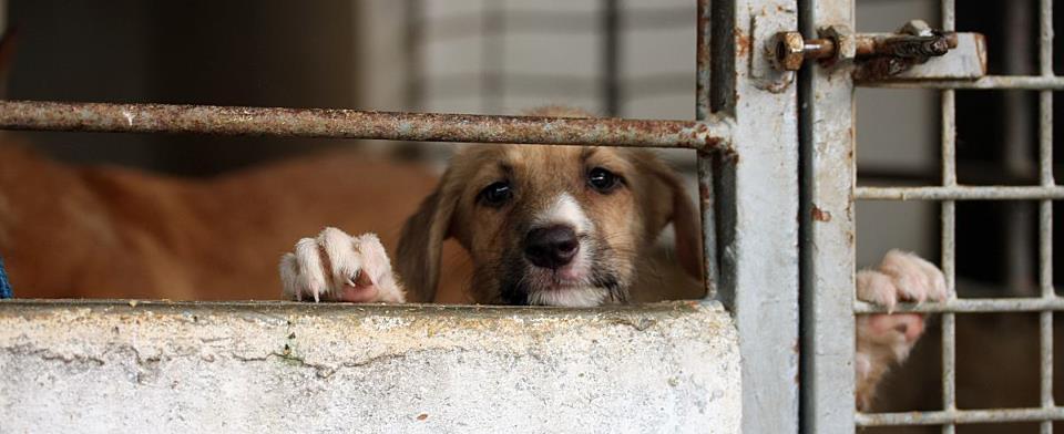 Unsere Hunde brauchen Ihre Unterstützung