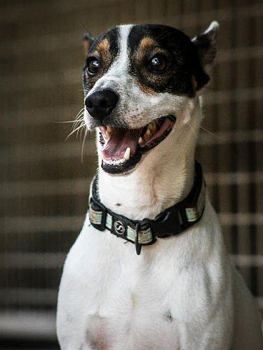 Wir freuen uns über Paten für den Hundemann, die uns helfen, die finanziellen Aufwendungen wie Futter, Unterkunft und tierärztliche Versorgung für ihn zu tragen, mit uns seine weitere Entwicklung verfolgen und ihm in Gedanken zur Seite stehen.