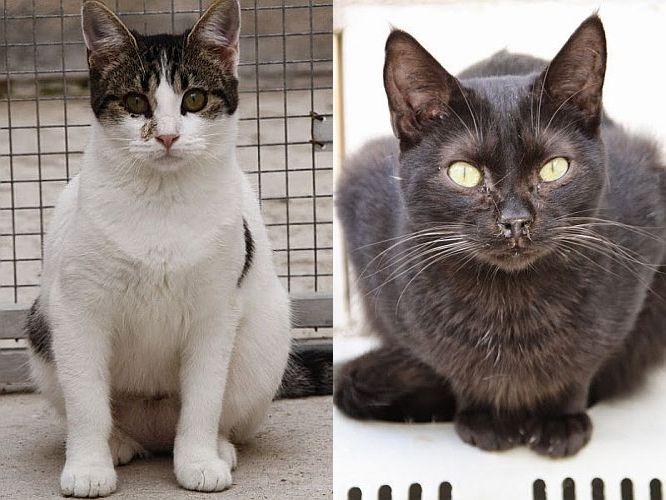 Unzertrennliches Katzenpärchen sucht Patenschaften
