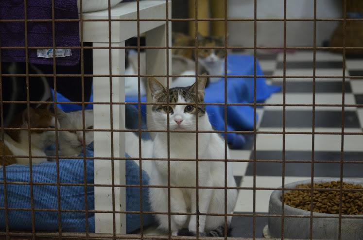 Unser Katzenprojekt benötigt Ihre Unterstützung.