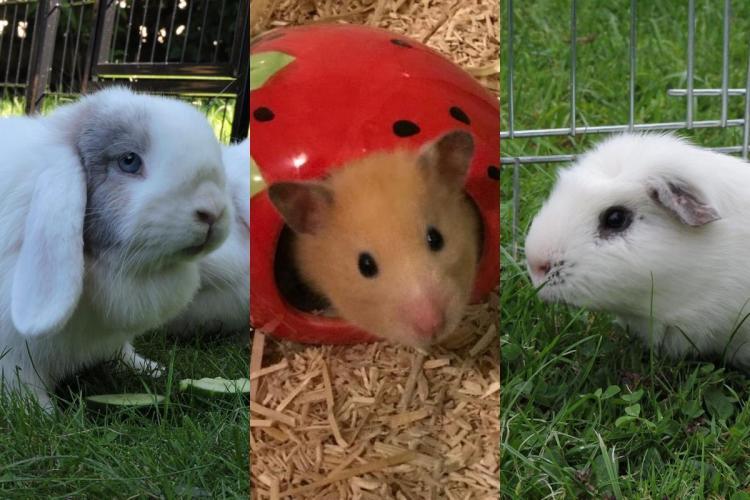 Unser Kleintierprojekt benötigt Ihre Unterstützung.