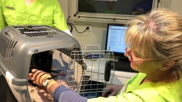 Kleine Susi beim Tierarzt
