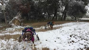Otilia beim Spaziergang im Schnee