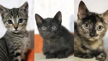 Babykatzen auf der Suche nach einem Zuhause