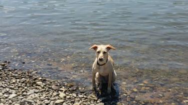 Auch Hazel kann schwimmen!