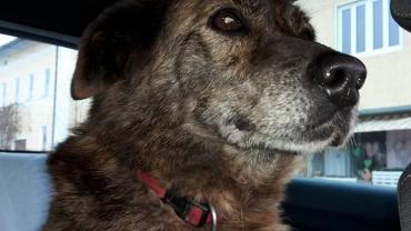 Unser Sorgenhund