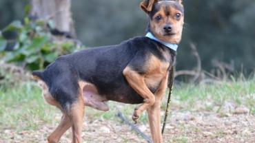 Pflegestellen für Hunde gesucht