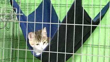 Hängematten für Katzen in Spanien
