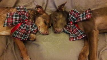 Pioneer und seine Hundefreunde ganz relaxed