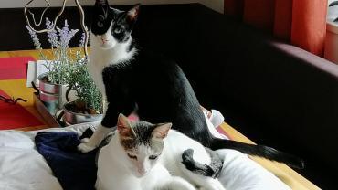 Starsky und Hutch sagen aus ihrem neuen Zuhause hallo!