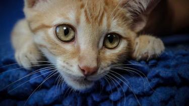 Unsere Katzennotfälle