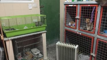 Das Tierheim Villena braucht unsere Hilfe
