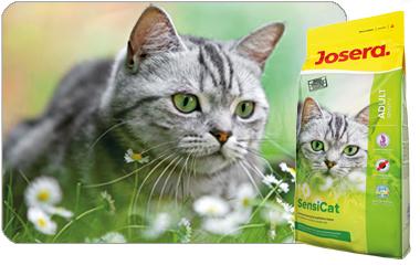 Die Protectora Villena und der Verein ASS benötigen dringend Katzenfutter-Spenden