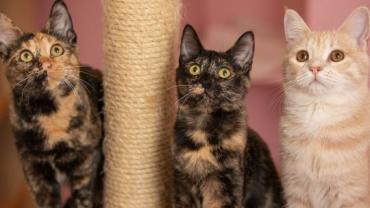 Pflegestellenkatzen