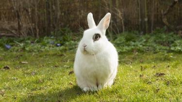 Outdoor-Gehegebau Kaninchen und Meerschweinchen