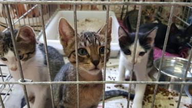 Katzenpflegestellen dringend gesucht!