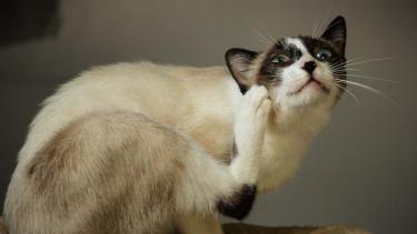 Eine Katze wird krank