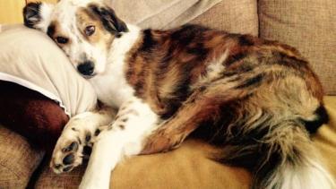 Nachricht vom tollsten Hund der Welt