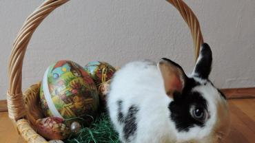 🐇 Frohe Ostern! 🐇