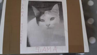 Ein Paket für Dama aus Villena