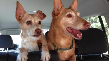 Zwei ehemalige Pflegehunde schicken Grüße