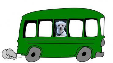 Raky - er kam mit dem Bus in 85540 Haar an!