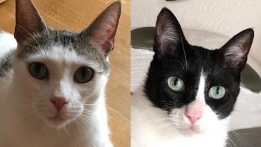 Langzeitpflegekatzen suchen Ihre Menschen! Wo sind Sie nur?