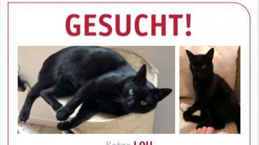 Kätzin Lou vermisst in 81929 München
