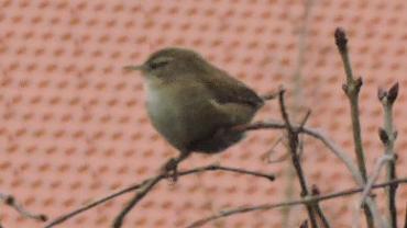 Winterfütterung und Vogelzählung