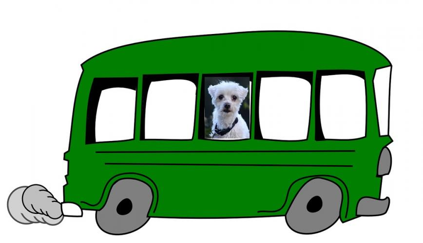 raky-im-bus-1.jpg