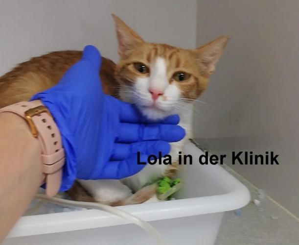 lola-at-the-clinic-21-2.jpg