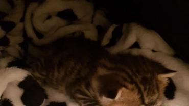 kitten11.jpg