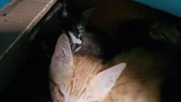 kitten12.jpg