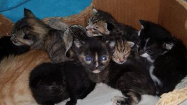 kitten13.jpg