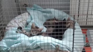 kitten14.jpg