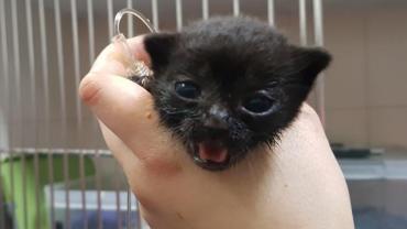 kitten7.jpg