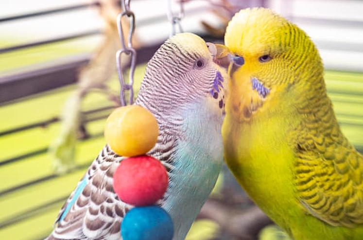 Unser Vogelprojekt benötigt Ihre Unterstützung